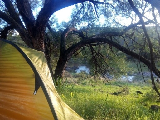 camp tree river